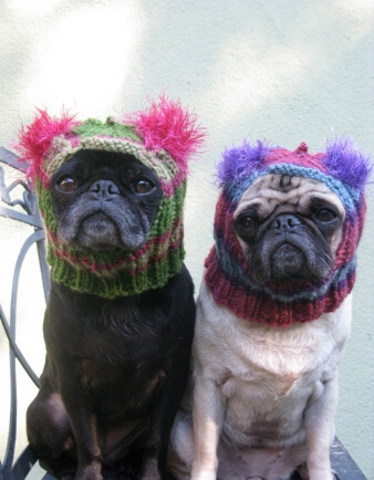 Snuggly Pug Hat