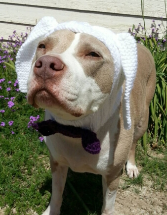 Rabbit Dog Hat