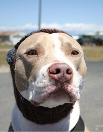 Aviator Dog Hat