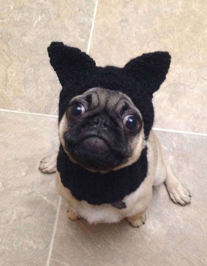 Black-Cat Dog Hat