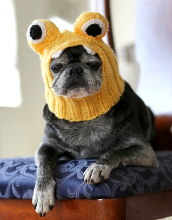 Little Monster Dog Hat