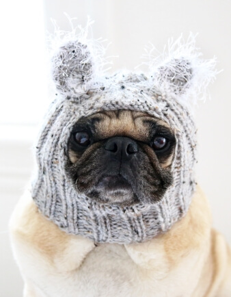 Baby Koala Bear Dog Hat