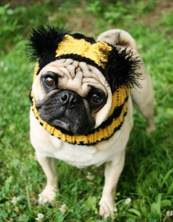 Bumble Bee Dog Hat - Pug Hat
