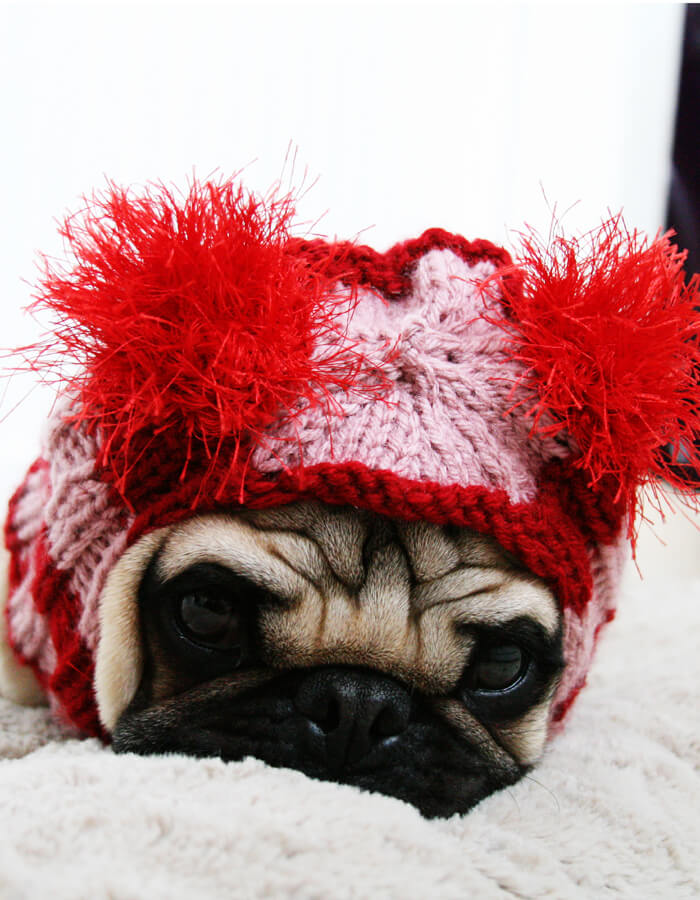 Sweet Valentine Dog Hat