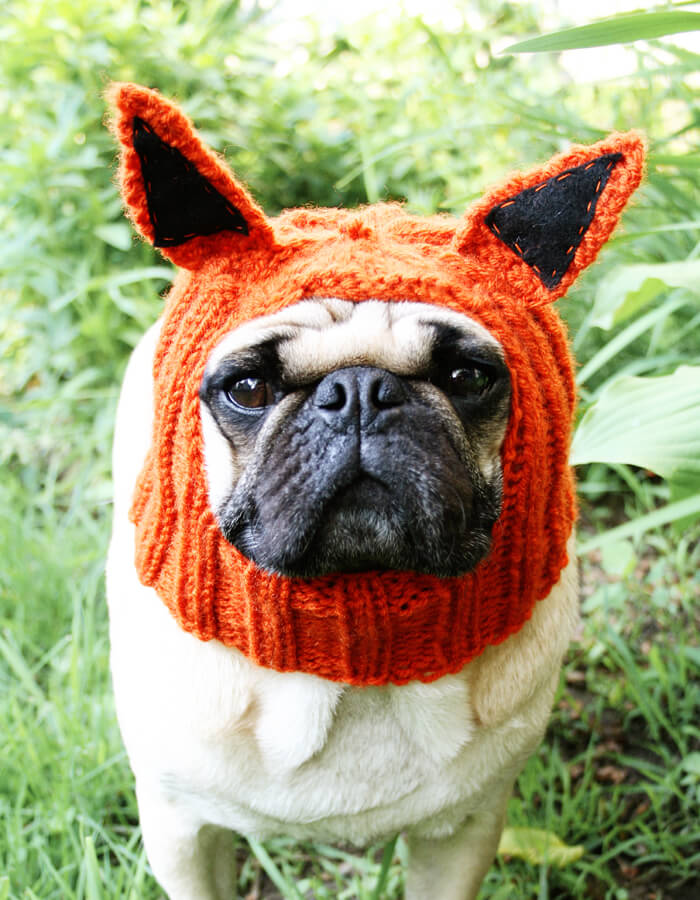 Fantastic Little-Fox Dog Hat