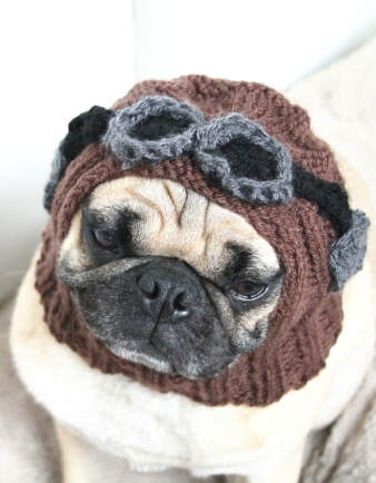 Aviator Pug Hat