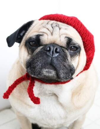 Petite French Beret Dog Hat