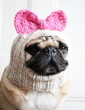 Betty Bow Dog Hat