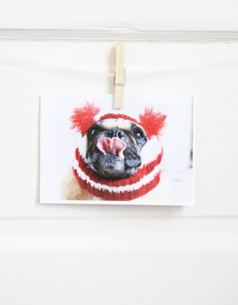 Happy Holidays Pug Card