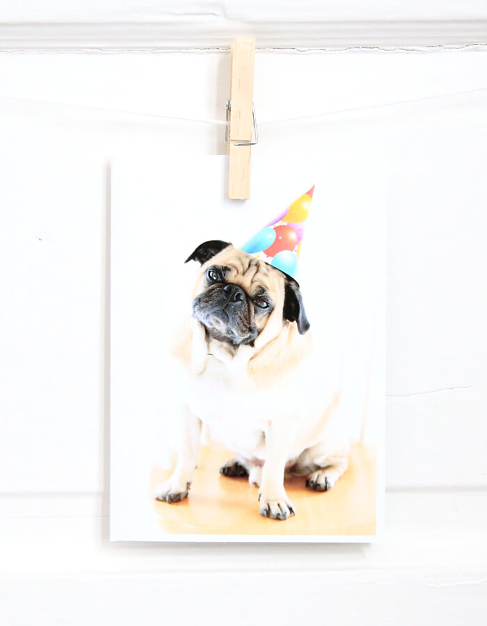 A Very Pugly Birthday Card