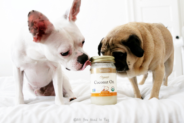 Caution: Despite the safety of coconut oil, if your dog has a health condition, it's best to check with your holistic vet before adding any new supplements, including coconut oil. Unlike some other oils which can become toxic when heated, coconut oil is very heat stable, even at high cooking temperatures.
