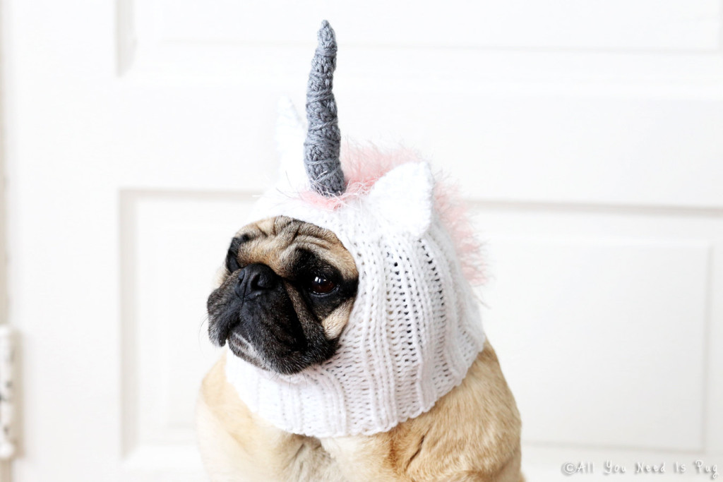 unicorn dog hat
