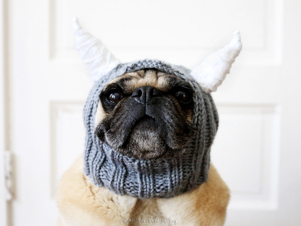 Little Beastie Pug Hat Dog Hat by All You Need is Pug