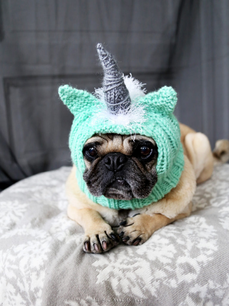 Unicorn Dog Hat Pug Hat by All You Need is Pug